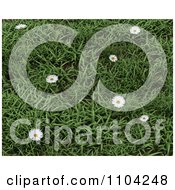 Clipart 3d Daisies In Green Grass Royalty Free CGI Illustration