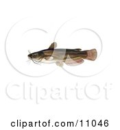 Clipart Illustration Of A Yellow Bullhead Catfish Ameiurus Natalis by JVPD