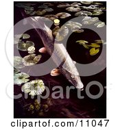 Clipart Illustration Of A Northern Pike Fish Swimming By Lilypads by JVPD