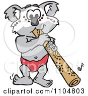 Australian Koala Playing A Didgeridoo