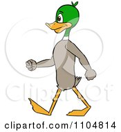 Clipart Mallard Duck Standing And Walking Upright Royalty Free Vector Illustration