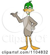 Clipart Happy Mallard Duck Standing Upright And Presenting Royalty Free Vector Illustration