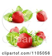 Three Strawberries With Blossoms And Leaves by merlinul