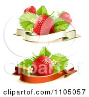 Red Strawberries With Leaves Blossoms And Blank Banners