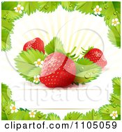 Strawberry Background With Leaves Blossoms And Copyspace 1 by merlinul
