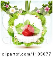 Strawberry With Dewy Leaves Blossoms And Twine On White by merlinul