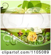 Green Leaf Background With A Ladybug Butterfly Dew And Roses