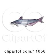 Clipart Illustration Of A Blue Catfish Ictalurus Furcatus by JVPD #COLLC11056-0002