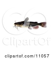 Clipart Illustration Of A Black Bullhead Catfish Amereiurus Melas by JVPD