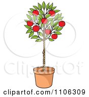 Potted Apple Tree With Red Fruit