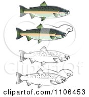 Clipart Chum Salmon Fish With And Without Fishing Wire Royalty Free Vector Illustration