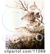 Clipart Illustration Of Black Crappie And White Crappie Fish Swimming by JVPD #COLLC11069-0002