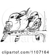 Clipart Three Black And White Kookaburra Birds Laughing On A Branch Royalty Free Vector Illustration