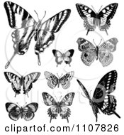 Clipart Retro Black And White Vintage Butterflies 2 Royalty Free Vector Illustration