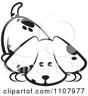 Clipart Cute Black And White Puppy Sniffing The Ground Royalty Free Vector Illustration by Lal Perera
