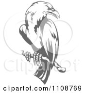 Clipart Perched Grayscale Crow Royalty Free Vector Illustration