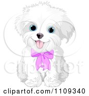 Cute Bichon Frise Or Maltese Puppy Dog Wearing A Pink Bow