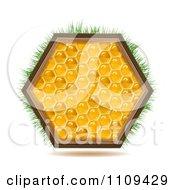 Honey Comb Hexagon With Grass