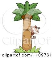 Monkey Behind A Coconut Palm Tree
