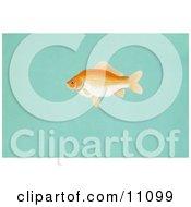 Clipart Illustration Of A Goldfish Carassius Auratus