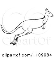 Clipart Black And White Jumping Kangaroo Royalty Free Vector Illustration