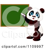 Clipart Cute Student Panda Writing On A School Chalk Board Royalty Free Vector Illustration by Pushkin