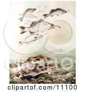 Clipart Illustration Of Sauger And White Bass Fish Swimming