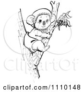 Clipart Black And White Aussie Koala Baby In A Tree Royalty Free Vector Illustration