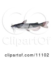 Clipart Illustration Of A White Catfish Amereiurus Catus