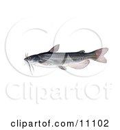 Clipart Illustration Of A White Catfish Amereiurus Catus
