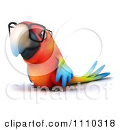 Clipart 3d Macaw Parrot Wearing Glasses 2 Royalty Free CGI Illustration