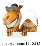 Clipart 3d Camel Wearing Sunglasses By A Sign 1 Royalty Free CGI Illustration