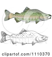 Clipart Black And White And Colored Pink Salmon Fish Royalty Free Vector Illustration