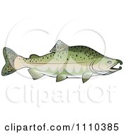 Clipart Pink Salmon Fish Royalty Free Vector Illustration