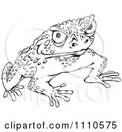 Black And White Cane Toad