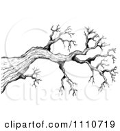 Clipart Black And White Sketched Bare Tree Branch Royalty Free Vector Illustration