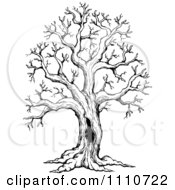 Clipart Black And White Sketched Hollow Bare Tree Royalty Free Vector Illustration