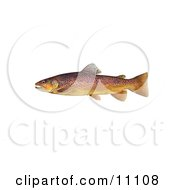 Clipart Illustration Of A Brown Trout Fish Salmo Trutta by JVPD #COLLC11108-0002