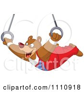 Athletic Gymnast Bear On The Flying Rings