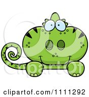 Cute Green Chameleon Lizard Looking Over A Sign