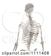 Clipart 3d Human Skeleton Featuring The Spine Royalty Free CGI Illustration by Mopic