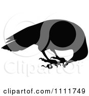 Clipart Silhouetted Raven Eating A Worm In Black And White Royalty Free Vector Illustration