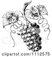 Clipart Vintage Black And White Grapes On The Vine Royalty Free Vector Illustration by Prawny Vintage