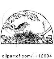 Retro Black And White Bird Feeding Its Chicks In A Nest