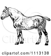 Clipart Vintage Black And White Percheron Horse Royalty Free Vector Illustration