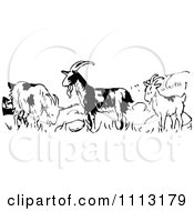 Clipart Vintage Black And White Goats In A Field Royalty Free Vector Illustration by Prawny Vintage