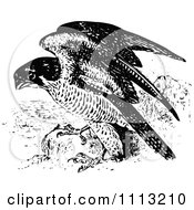 Clipart Vintage Black And White Peregrine Falcon Royalty Free Vector Illustration