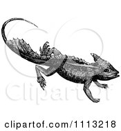 Clipart Vintage Black And White Basilisk Lizard Royalty Free Vector Illustration by Prawny Vintage