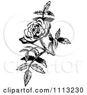 Clipart Vintage Black And White Rose Blossom Design Element Royalty Free Vector Illustration by Prawny Vintage