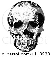 Vintage Black And White Human Skull 1